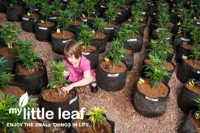 charlotte-little-leaf-1